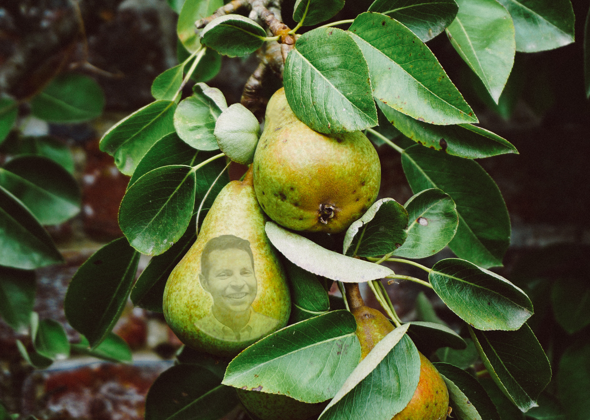 toby-peartree